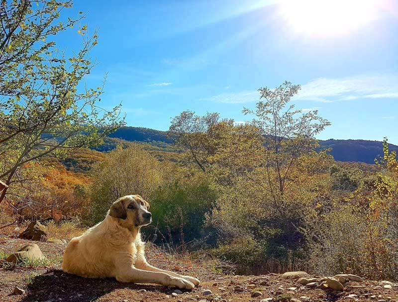Georgian dog in the sun