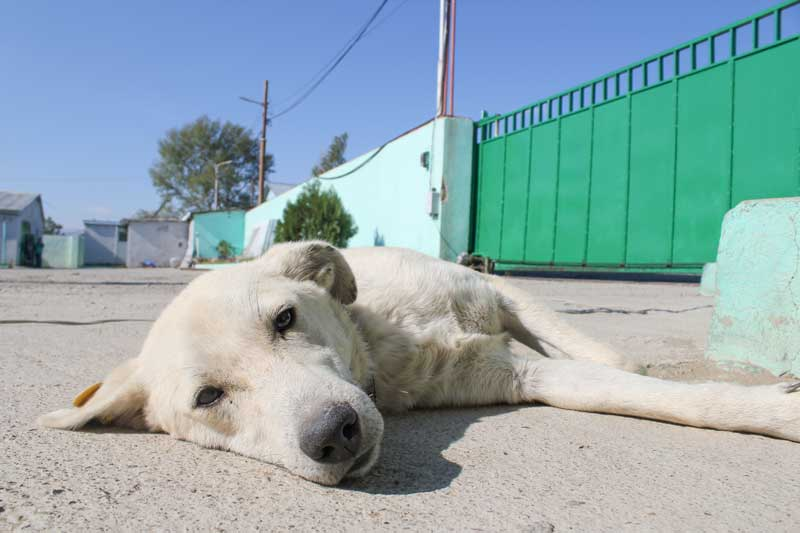 dog lying in the sun in tbilisi georgia