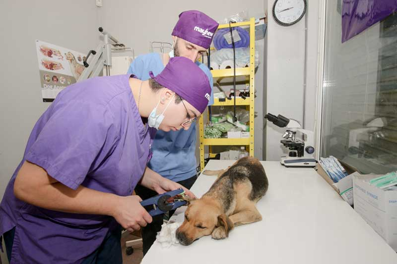 Vets with dog in clinic Tbilisi Georgia