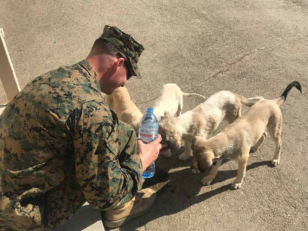 stray puppies and dogs on a US marine base in Georgia