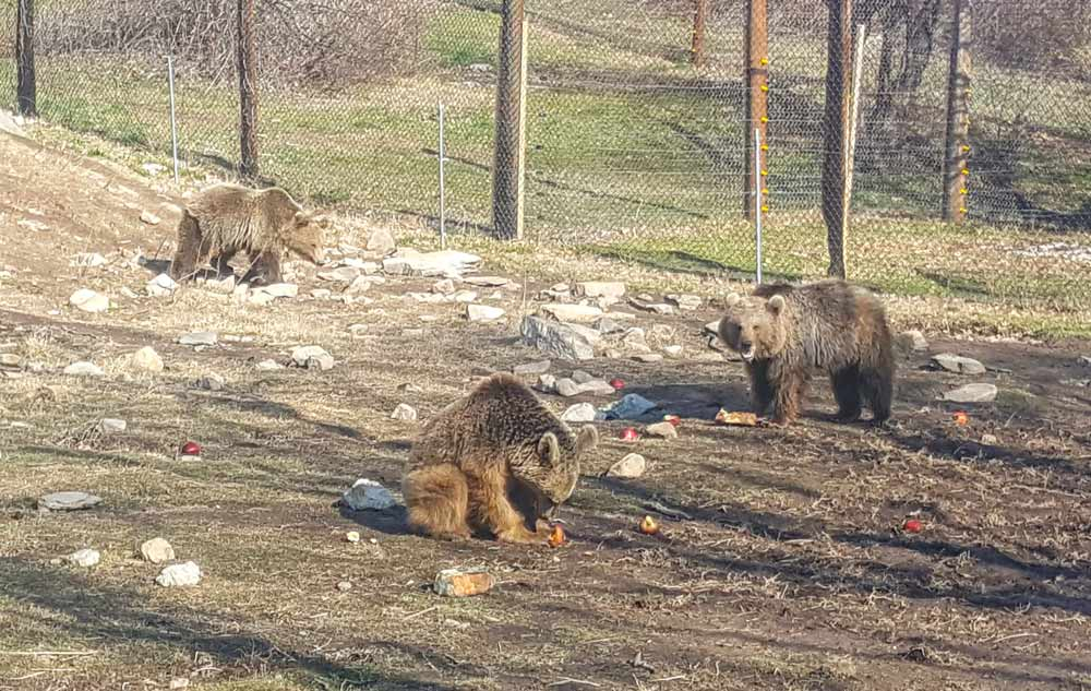Bears in greece sanctuary rescue
