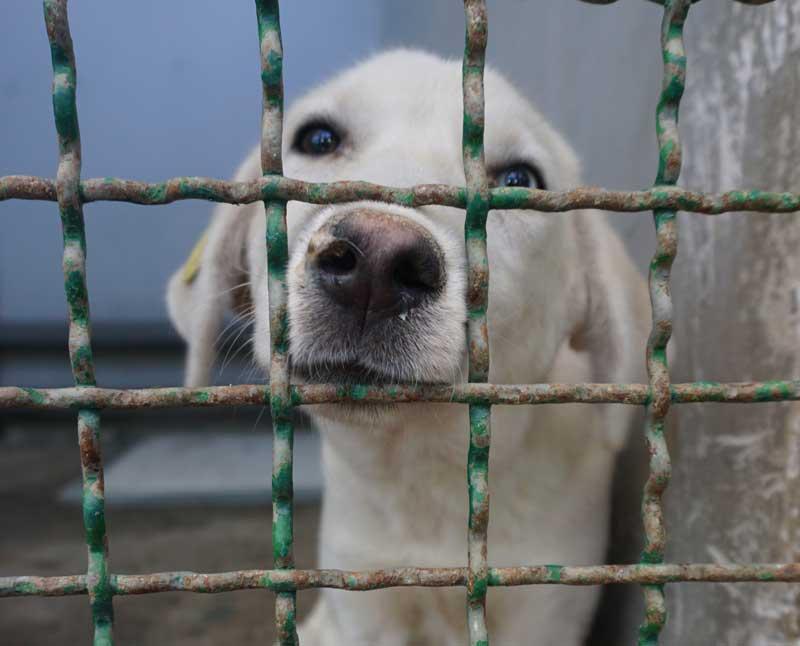 dog looks through fence at mayhew georgia tbilisi