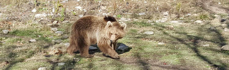 Rescued Bears Update