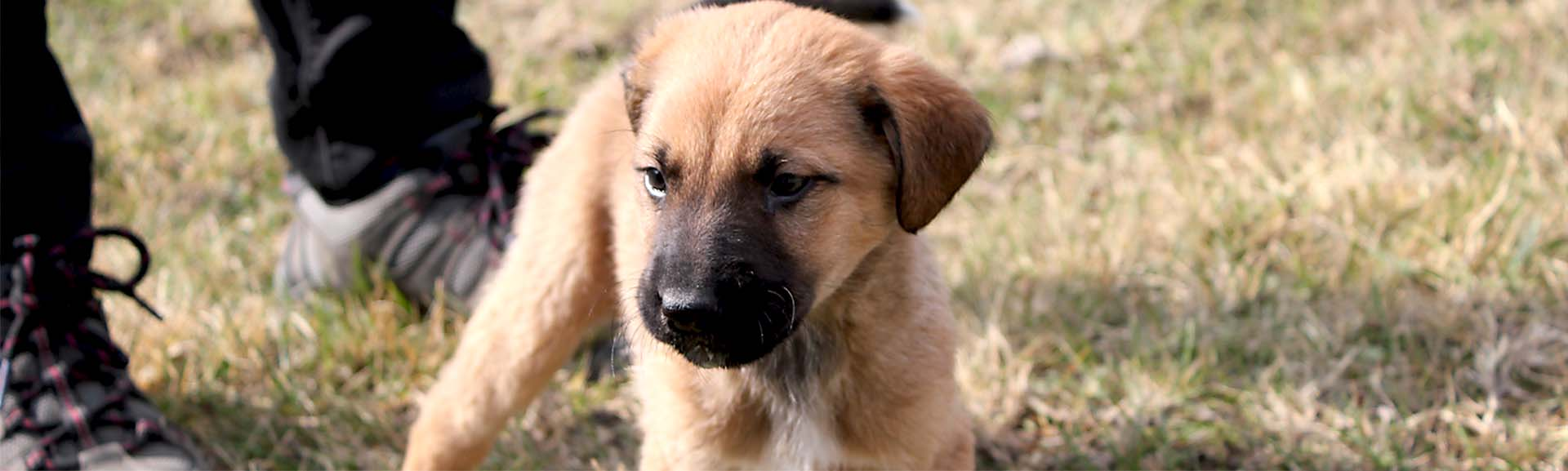 Working to secure safer lives for free-roaming dogs in Georgia